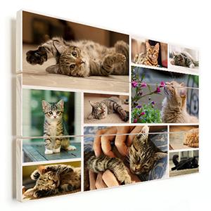 collage huisdier op hout