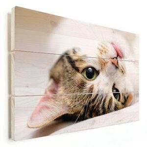 foto kat op hout